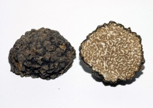Tuber-aestivum Sagra tartufo laconi
